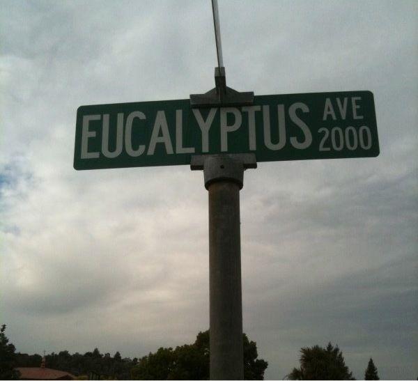 San Carlos Neighborhood Halloween 2020 Eucalyptus Avenue: A San Carlos Tradition For Halloween   San